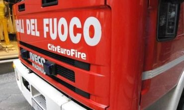 Incendio in un terreno agricolo, morti due vitelli