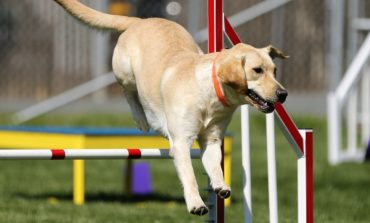 Agility dog, a San Mariano cani e padroni all'aria aperta nel weekend