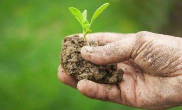 Favorire gli spostamenti per attività agricole amatoriali: la proposta del PD regionale