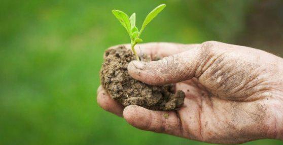 agricoltura amatoriale partito democratico pd glocal