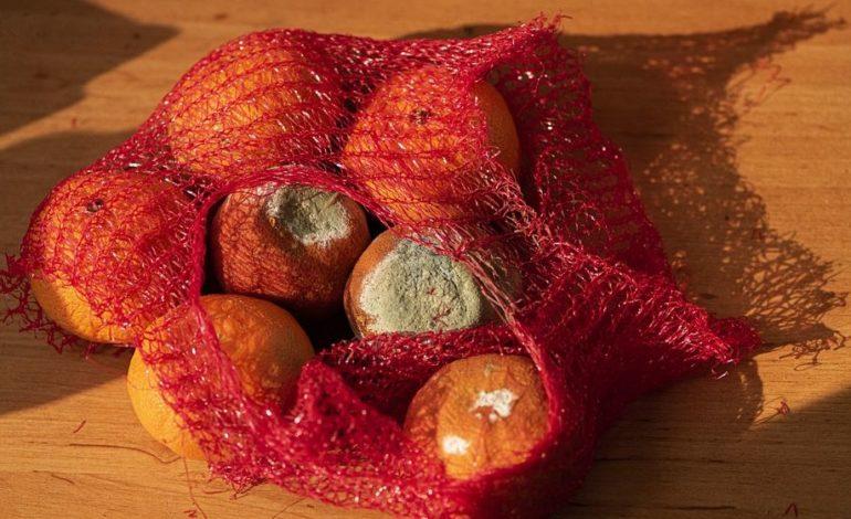 cibo cooperativa babele requpera scarti alimentari sociale spazzatura corciano-centro ellera-chiugiana glocal