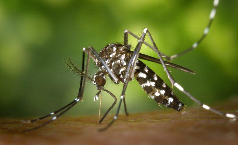La Zanzara Tigre è in anticipo, ecco come prevenirla
