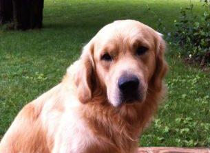 Trovato morto il cane scomparso, probabilmente avvelenato con una polpetta