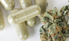 Farmaci cannabinoidi, approvata la legge regionale a larga maggioranza