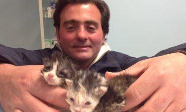 Gattini trovati nella spazzatura salvati da operatore Gesenu, ora in adozione a San Mariano
