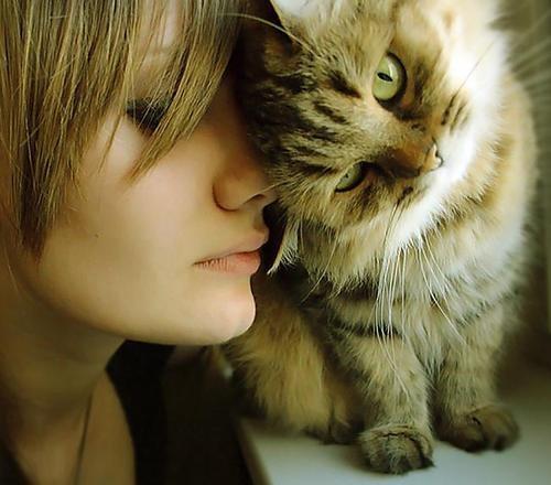 Il tuo gatto ti ama? 10 segnali per scoprirlo