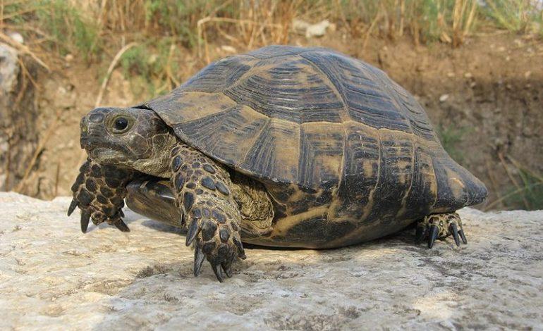 letargo tartarughe 4zampe corciano-centro cronaca