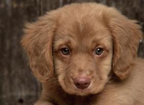 Weekend a quattro zampe, tutti gli appuntamenti del Quasar Dog