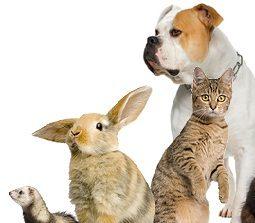 Anagrafe Animali d'Affezione: cos'è?