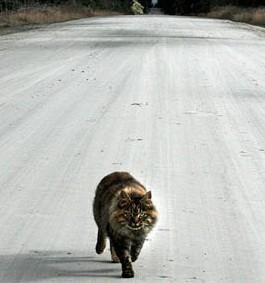 gatto investito veterinario 4zampe corciano-centro eventiecultura