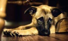 Cosa dobbiamo sapere sull'epilessia del cane