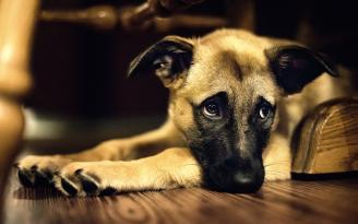 cane epilessia 4zampe corciano-centro eventiecultura