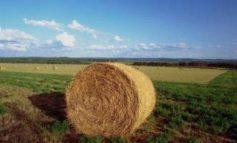 """IMU sui terreni agricoli, l'assessore Baldelli: """"Segnale di buon senso"""""""