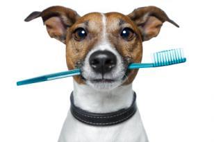 Ecco come combattere l'alitosi del cane o del gatto