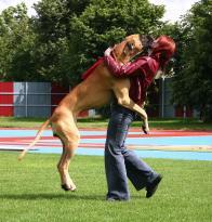 Come insegnare al proprio cane a non saltare addosso