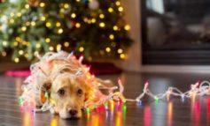 10 rischi sotto l'albero di natale per i vostri animali