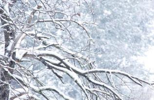 Maltempo: allerta nevicate al centro-sud anche a bassa quota