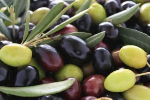 coldiretti olio olive glocal