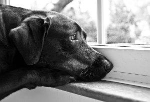 Il vostro cane soffre di ansia da separazione? Piccoli suggerimenti