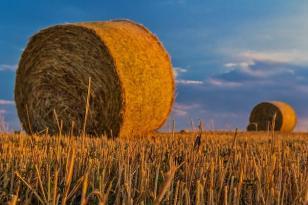 """Imu agricola, Corciano sarà esente. L'assessore Baldelli: """"Bene, ma rimane qualche perplessità"""""""