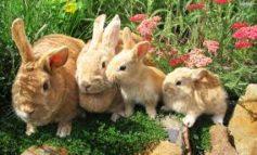 I disordini gastroenterici nel coniglio