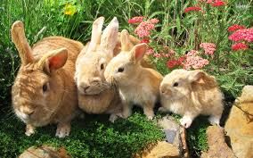 animali chiatante coniglio 4zampe