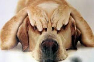 Chi ha paura del veterinario? Piccoli consigli per far visitare senza problemi i nostri amici