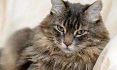 Il mio gatto è cambiato: ipertiroidismo una patologia comune