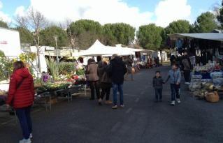girasole mercato san-mariano