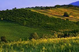 Piano di Sviluppo Rurale 2014-2020, anche l'Umbria avrà nuove opportunità di crescita
