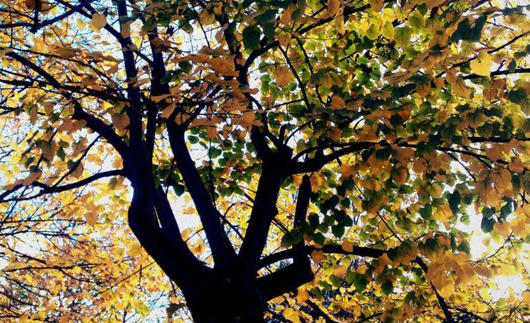 albero ambiente ecologia m5s territorio tree glocal politica