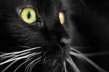 Il gatto e le sue leggende: 9 miti da sfatare