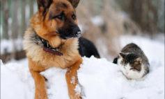 Arriva il freddo: 8 consigli per proteggere i nostri animali