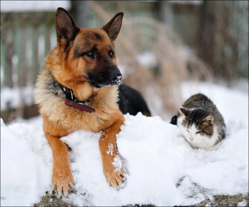 4 zampe animali cani consigli freddo gatti gelo proteggere dal freddo rubrica veterinario 4zampe corciano-centro