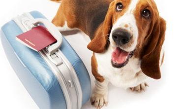 Viaggi con animali? Anche i cani e i gatti hanno bisogno del passaporto