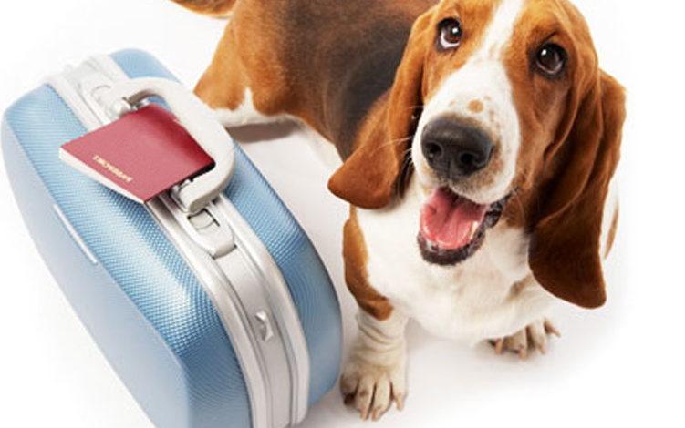 animali antirabbica cani gatti italia mondo passaporto unione europea vacanze vaccini viaggio 4zampe corciano-centro ellera-chiugiana mantignana migiana san-mariano solomeo