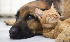Oggi i cani e i gatti vivono il doppio rispetto a un secolo fa