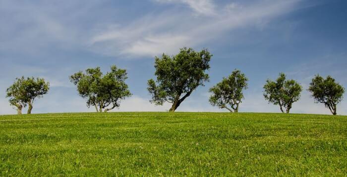 """Ambiente, M5S Corciano: """"Il verde è un interesse pubblico o privato?"""""""