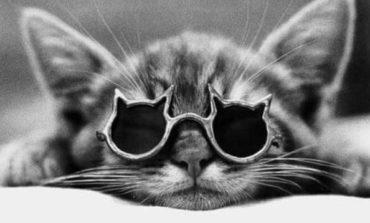 La congiuntivite nel gatto
