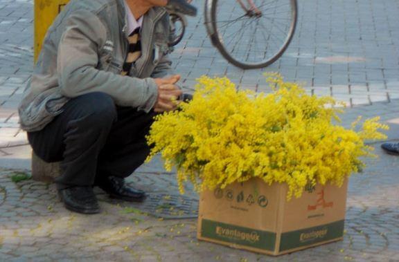 Mimose abusive, Federfiori scrive a prefetti e sindaci per chiedere controlli rigorosi