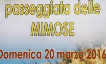 Passeggiata delle mimose: domenica l'iniziativa dedicata alle donne che hanno reso questo mondo un posto migliore