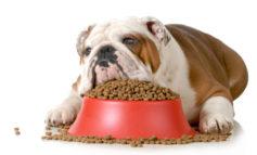 Il vostro cane mangia fino a scoppiare? Potrebbe avere la sindrome di Cushing