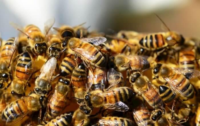 Apicoltura: i comuni umbri alleati delle api, nuove opportunità per la tutela della biodiversità