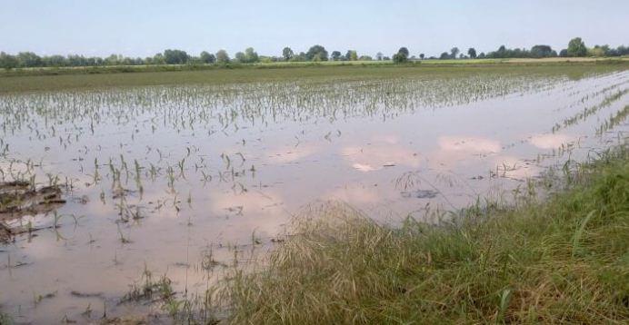 agricoltura coldiretti maltempo pioggia cronaca