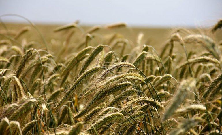 agricoltura contributi glocal