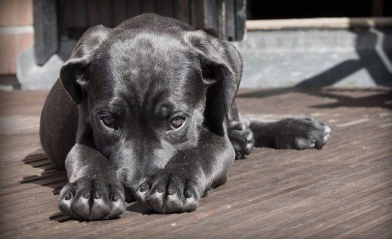 """Abbandono dei cani in diminuzione, AIDAA: """"Aumentano le adozioni nei canili"""""""