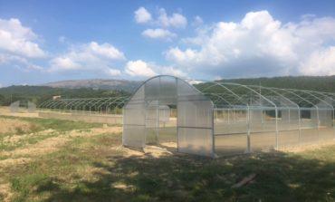 Progetto mense scolastiche: negli orti di Mantignana costruite le prime serre