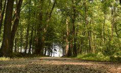 Corpo senza vita trovato nelle campagne fra Corciano e Perugia