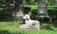 """Funerali per animali troppo cari anche in Umbria, l'AIDAA segnala: """"Fino a 4000 euro"""""""