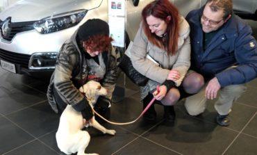 Successo per la giornata Pet-Friendly: Luna, meticcia di 10 anni, ha trovato un padrone
